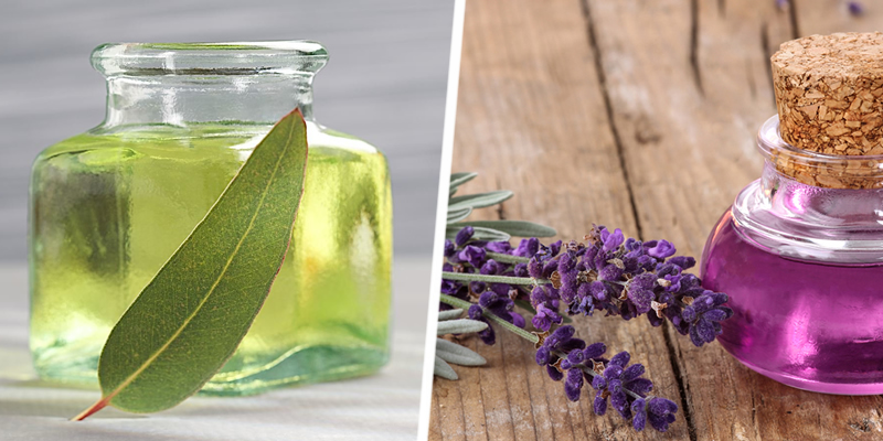 Lemon Eucalyptus and Lavender Oil