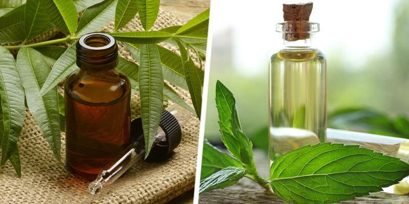 Tea Tree and Peppermint Oil