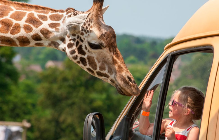 Top 10 Best Safari Parks in England