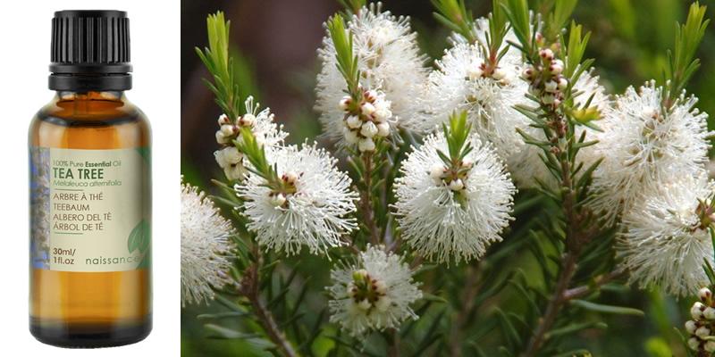 Naissance Pure Tea Tree Essential Oil